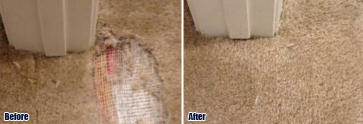 Pet Damaged Carpet 805 422 3176 Premier Simi Valley