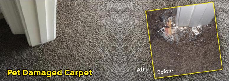 Pet Damaged Carpet Simi Valley