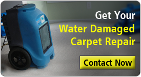 Water Damaged Carpet